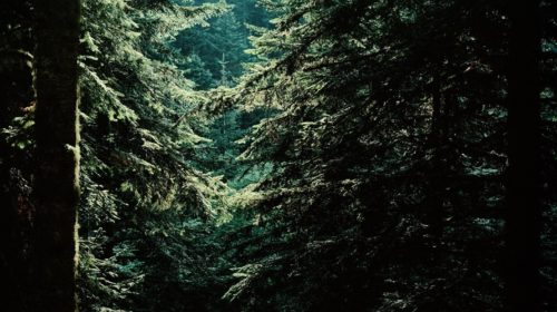 Sacred trees (2)