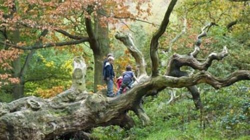 Few UK children connected to nature : Young boys playing on fallen tree in Autumn