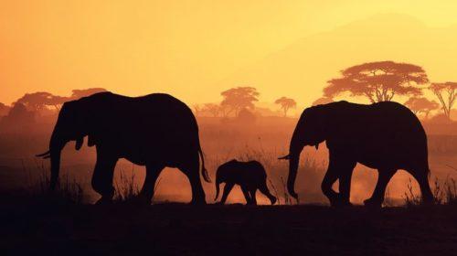 Elephant conservation (2)
