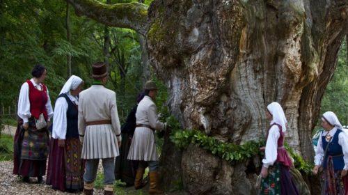 Lithuania- sacred grove (2)