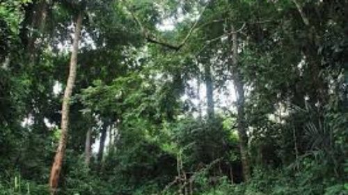 Sierra Leone forests