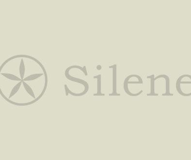 no-image-silene
