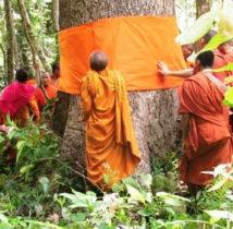 Combidja monstic forest