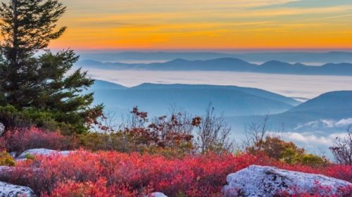 Virginia's Monongahela Forest (2)