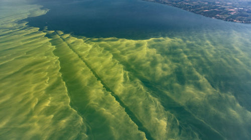 lake_erie_algae_bloom_2017