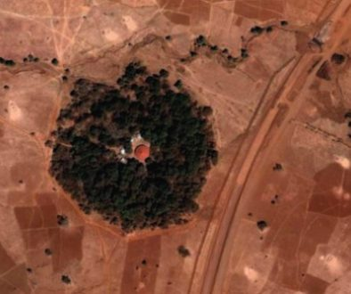 aerial-forest-480