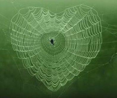 Spider-webs-heart