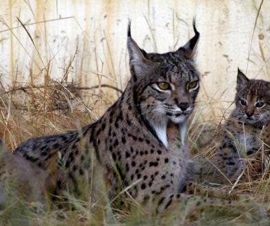 linx andalusia