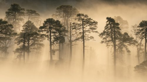 boscos emboirats